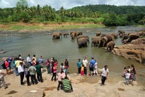 pinnawala-orphanage-sri-lanka